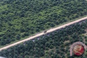 Produksi kelapa sawit Sumatera Selatan merosot