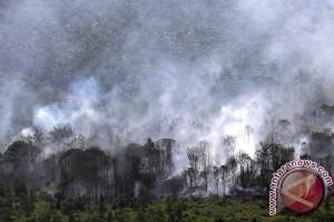 Hutan rakyat dua hektare terbakar