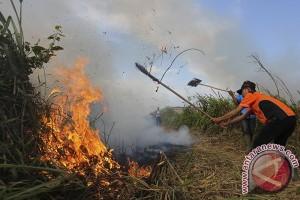Perusahaan perkebunan Sumsel siaga cegah kebakaran hutan