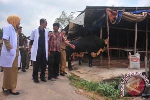 Wali Kota Palembang pantau penjualan hewan kurban