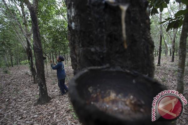 Harga getah karet petani bertahan di Rp9.000