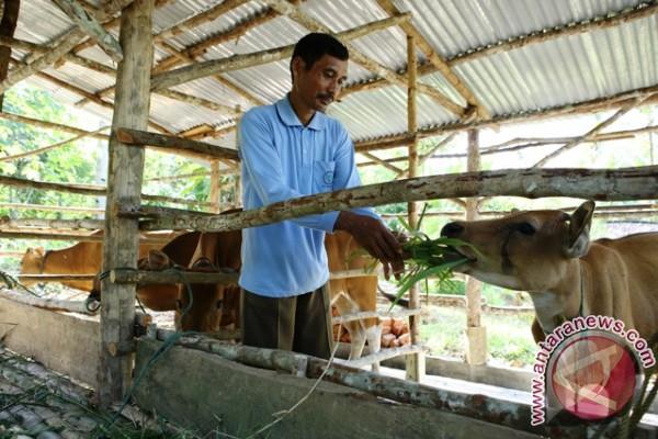 Peternak sapi diminta tingkatkan produksi susu