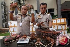 Pembawa benih lobster terancam enam tahun penjara