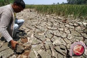 Belasan hektare sawah di Aceh Selatan krisis air