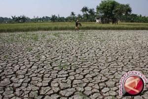 Ratusan hektare sawah di OKU kekeringan