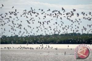 Burung Migrasi di TNBS Jambi