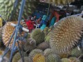 Pembeli menikmati buah durian di Sentra Durian Pasar Kuto Palembang, Sumsel, Sabtu (10/12). Pada musim durian akhir tahun ini Kota Palembang kebanjiran penjual durian yang menggelar dagangan di pinggir jalan dan menjadi wisata tongkrongan durian 24 jam dengan harga bervariasi antara Rp10.000 hingga Rp25.000/buah. (Antarasumsel.com/Feny Selly/16)