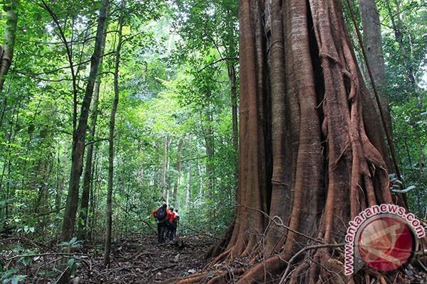 Mukomuko Bengkulu peta kawasan hutan lindung