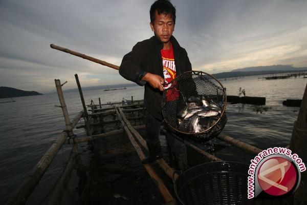 100 ton ikan keramba mati keracunan