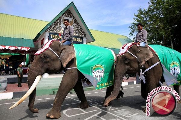 100 gajah ambil cuti dan berpiknik di Nepal