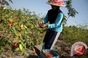 Sistem pertanian kontrak stabilkan stok dan harga