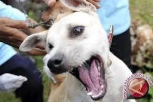 9 warga terkena gigitan hewan penular rabies