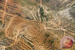 Moratorium Perkebunan Kelapa Sawit