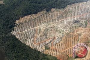 Ratusan hektare sawit di hutan produksi dimusnakan