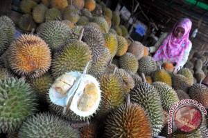 Durian semengok sakti khas OKU rasanya manis dan tebal