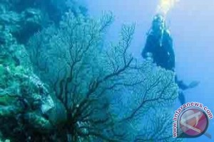 Kelestarian alam laut Wakatobi harus dijaga