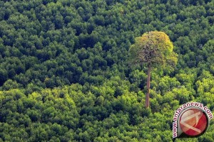 Rambah hutan di Pelalawan satu ekskavator disita