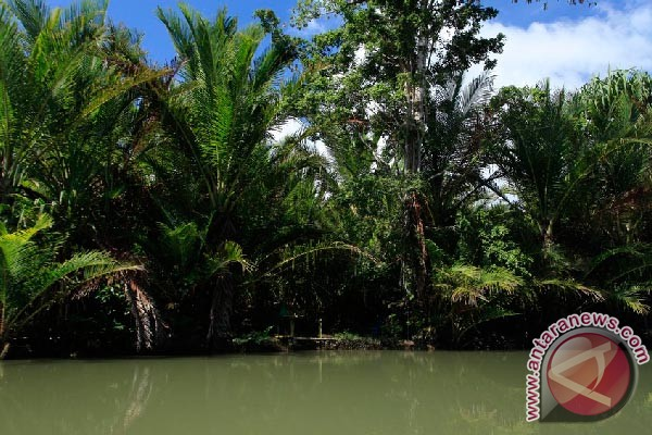 Lindungi hutan sagu untuk anak cucu