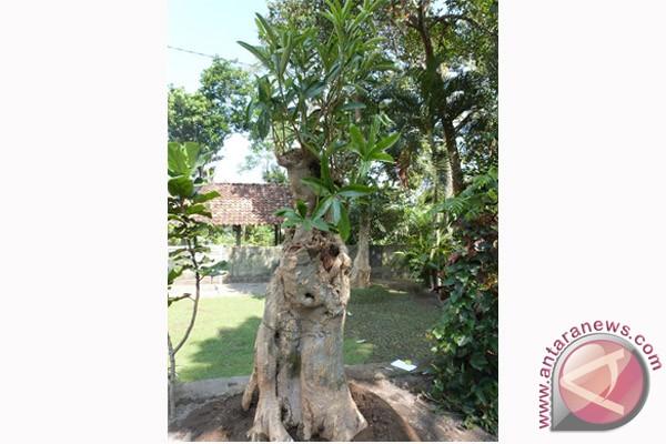 Lima menteri tanam pohon pule di Arboretum