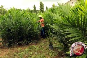 SMK Sumsel terapkan kurikulum kelapa sawit