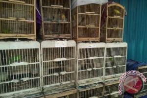 Burung perenjak jawa buruan utama di pasar burung