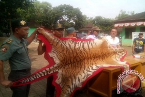 Polisi tangkap pemburu dan penjual kulit harimau