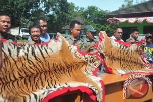 Perdagangan Kulit Harimau