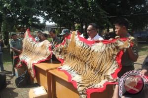 Petugas gagalkan transaksi kulit Harimau Sumatera