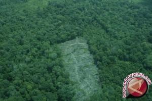 Polisi mempetakan hutan rusak akibat perambahan
