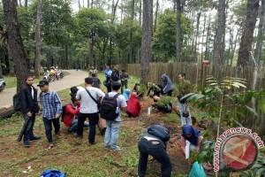 Pohon pinus Punti Kayu Palembang  mulai diregenerasi