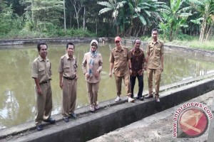 Ogan Komering Ulu akan budidayakan ikan gabus