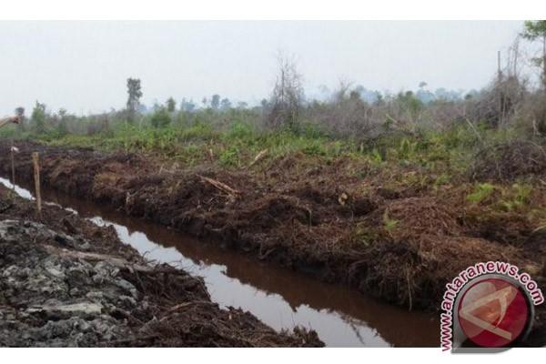 Restorasi gambut mulai berjalan di iga kabupaten Sumsel