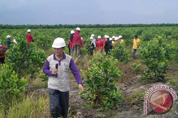 Pejabat: Lahan gambut akan dimanfaatkan untuk pertanian