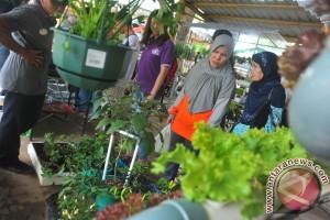 Kementan dorong produksi sayuran dari lahan pekarangan