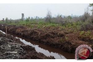 Ogan Komering Ilir sediakan 10.000 hektare restorasi gambut