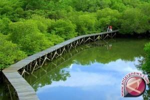 Hutan mangrove Bangka Tengah digemari wisatawan