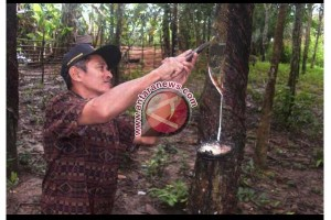 Kecamatan Betung Banyuasin mayoritas petani karet