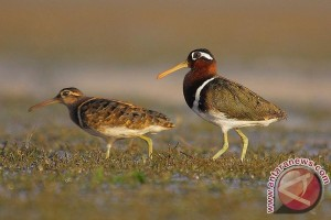 Polusi suara berisiko ganggu ketahanan hidup hewan