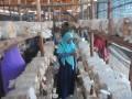 Pengunjung melihat-lihat jamur tiram di Rumah Jamur desa pedado Palembang, Sumsel, Selasa (28/3). Wisata rumah jamur yang digagas Rumah Belajar Ceria bekerja sama dengan Pertamina ini menggelar edukasi budidaya Jamur Tiram yang dijalankan di desa Pedado. (Antarasumsel.com/Feny Selly/Ag/17)