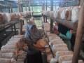Pengunjung memetik jamur tiram di Rumah Jamur desa pedado Palembang,Sumsel, Selasa (28/3). Wisata rumah jamur yang digagas Rumah Belajar Ceria bekerja sama dengan Pertamina ini menggelar edukasi budidaya Jamur Tiram yang dijalankan di desa Pedado. (Antarasumsel.com/Feny Selly/Ag/17)