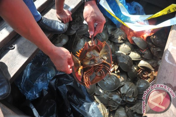 Polda Sumsel gagalkan penyelundupan satwa laut dilindungi
