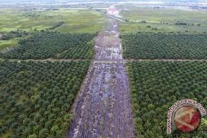 DLHK Bengkulu bersihkan sawit dalam hutan