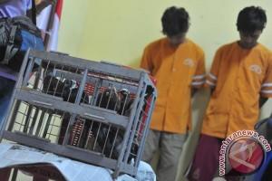 Polisi amankan tiga pemuda pencuri puluhan merpati