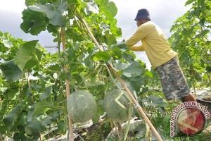 Kadisbun: Petani Sumsel agar tingkatkan kualitas karet