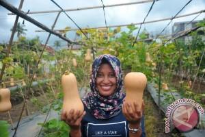 Labu varietas baru mulai dikembangkan di Palembang