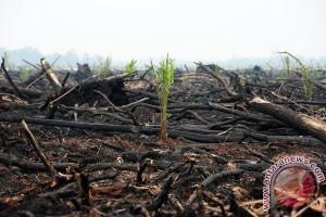 Indonesia akan bangun pusat ekosistem gambut tropis
