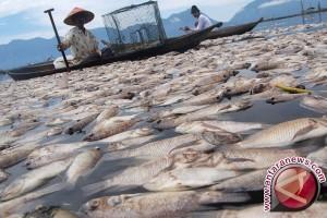 Ribuan ikan di Sungai Alin mati