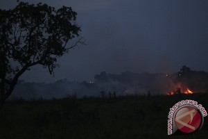 Kebakaran lahan gambut terjadi di jalan Palembang-Inderalaya