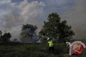 Aktivis lingkungan minta perda Karhutla diterapkan