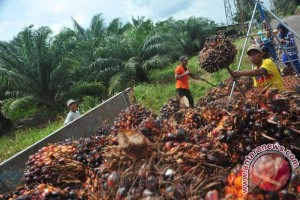 Indonesia asks Malaysia to jointly fight campaign against palm oil